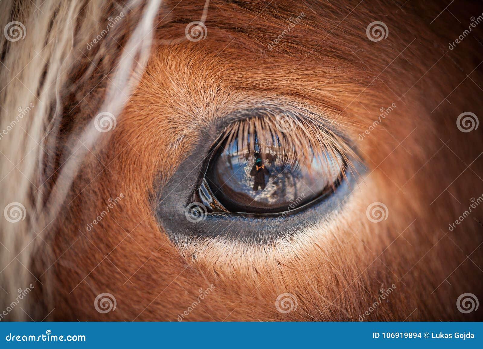 Konie w górach w Iceland