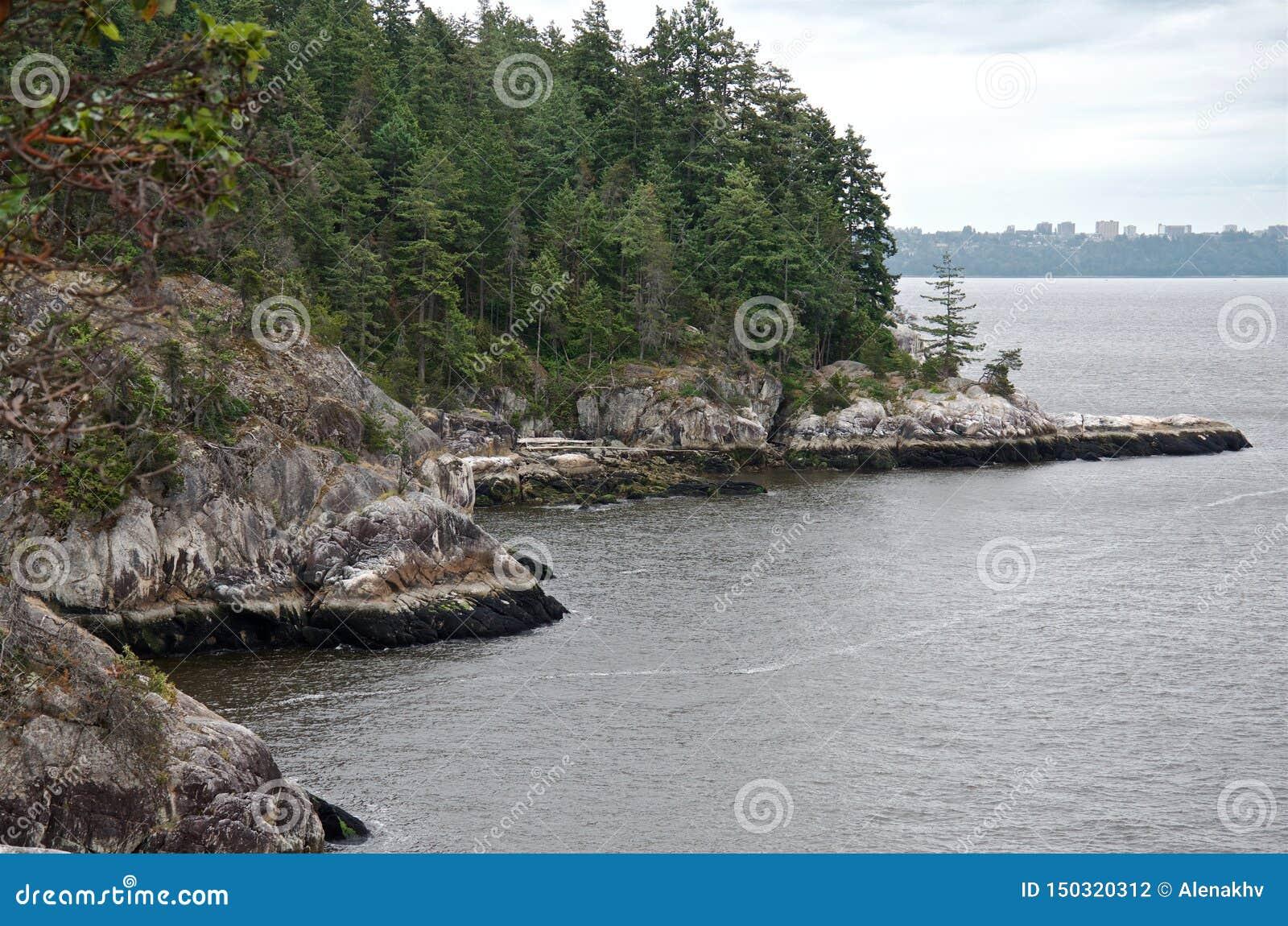 Koniferenwald auf Küstenklippen im regnerischen Wetter,