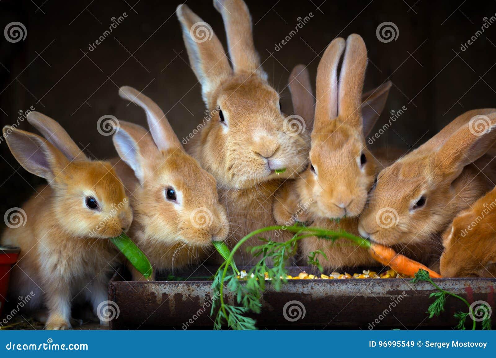 Konijn en kleine konijnen