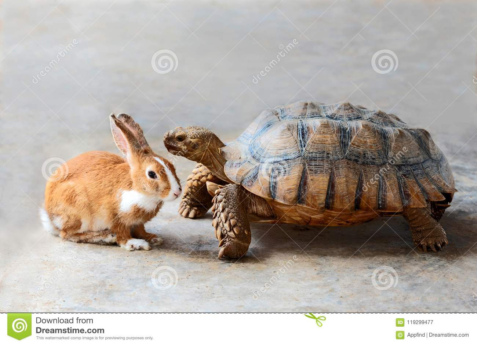 Konijn en schildpad