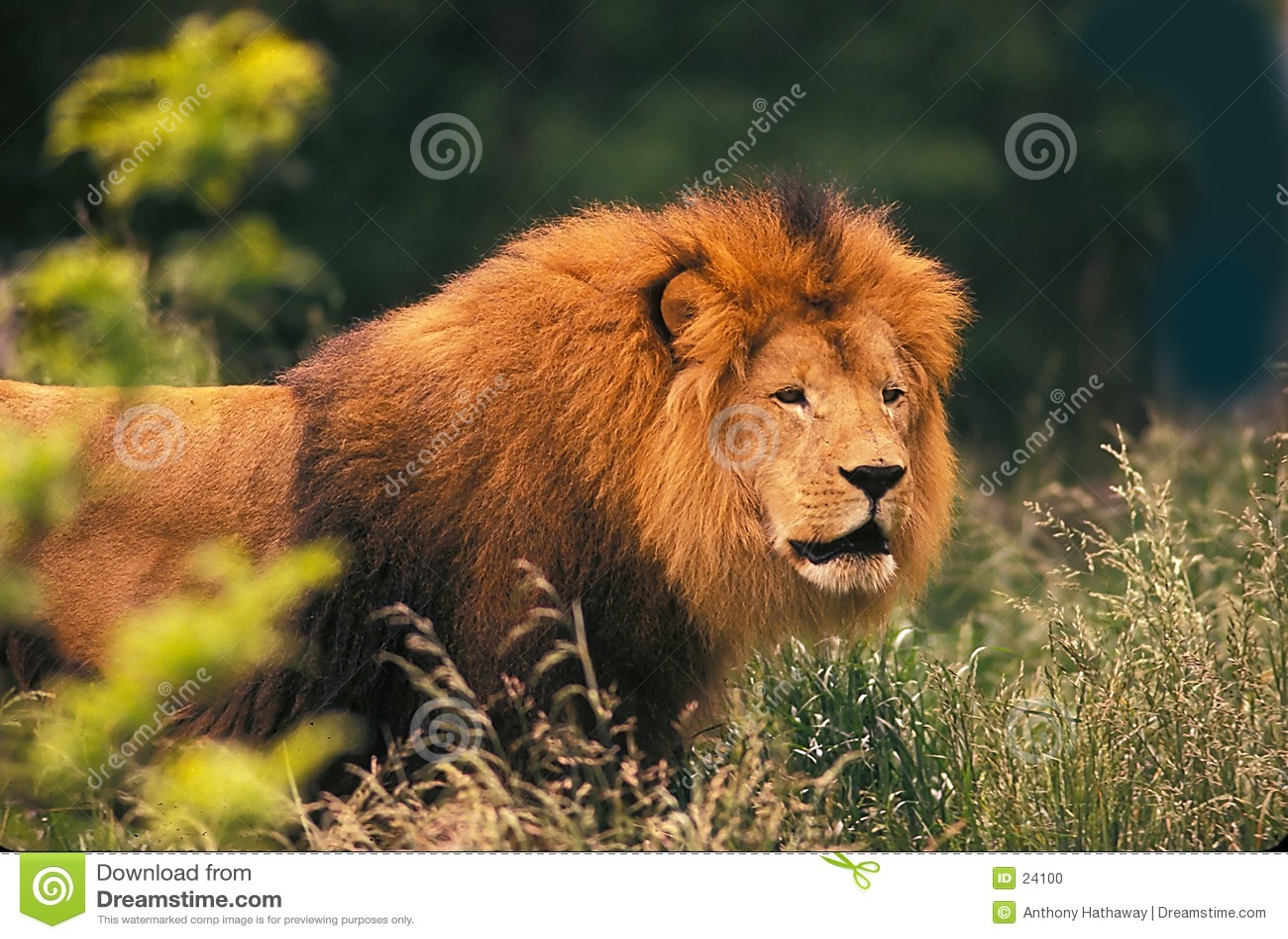 Koning van Dieren