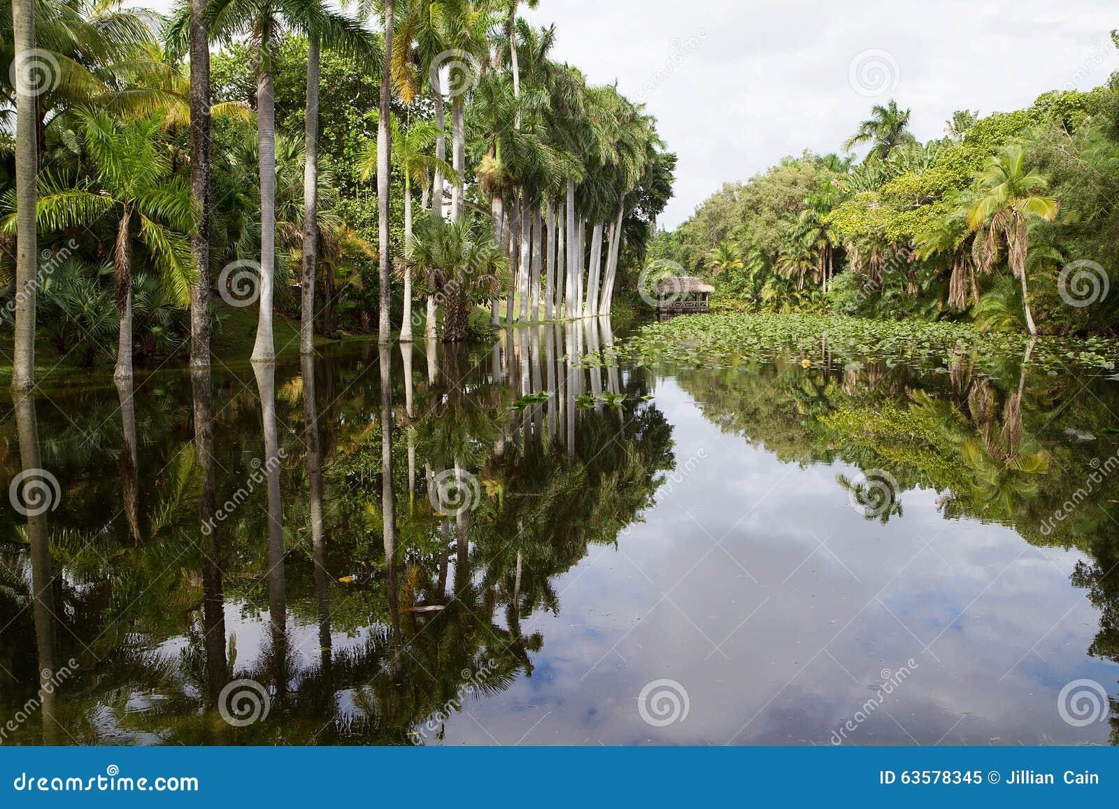 Koninklijke Palmen die in Slough van het Bonnethuis nadenken