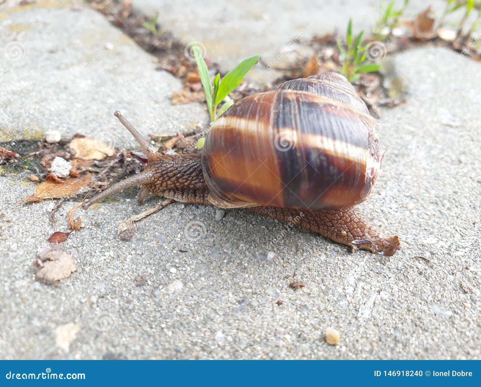 Konkret snail