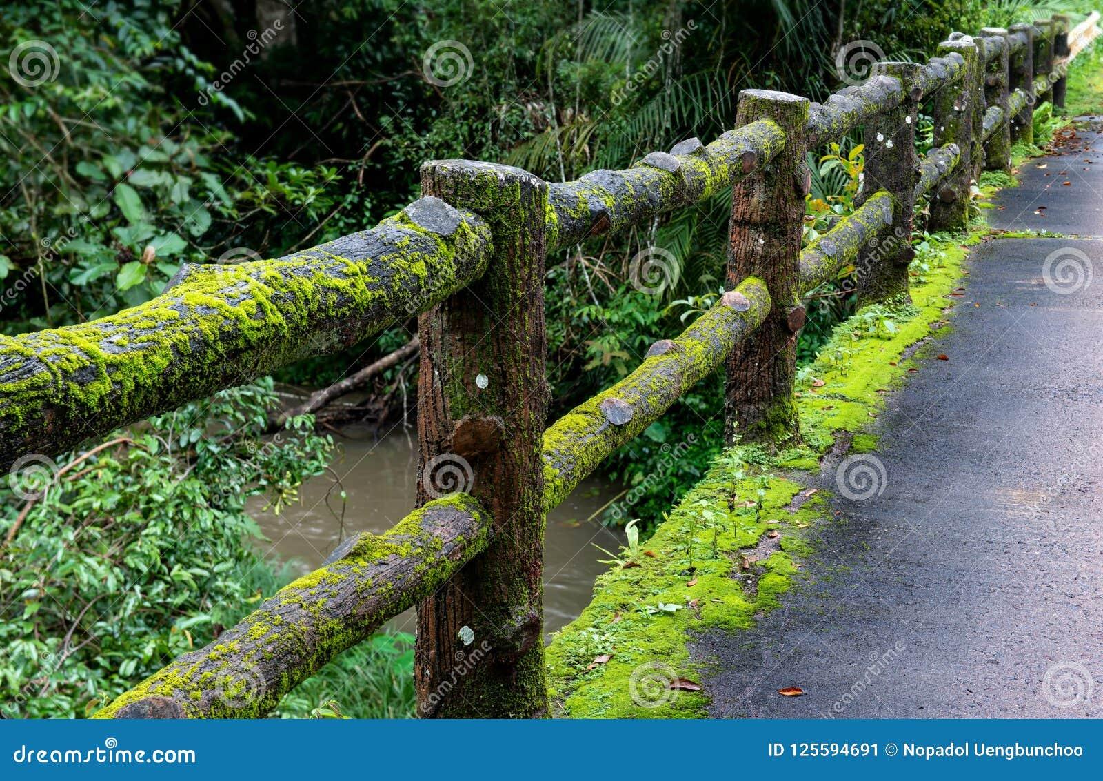 Konkret staketstolpebro med mossa