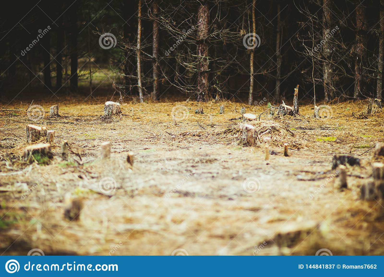 Konopie w polanie w lesie