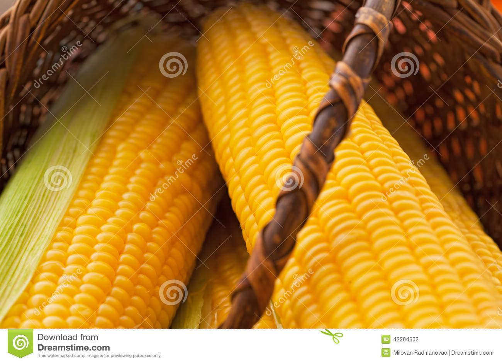 Download Konserverar nytt arkivfoto. Bild av kernels, inget, maize - 43204602