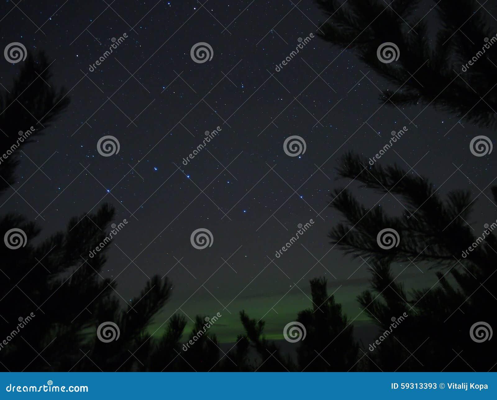 Konstellation för stor skopa (Ursa viktigt), träd och polara ljus för morgonrodnad