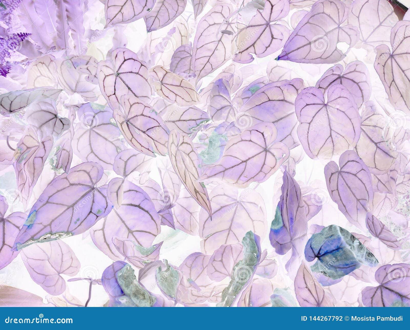 Konsten av negativa sidor för Anthuriumcrystallinum