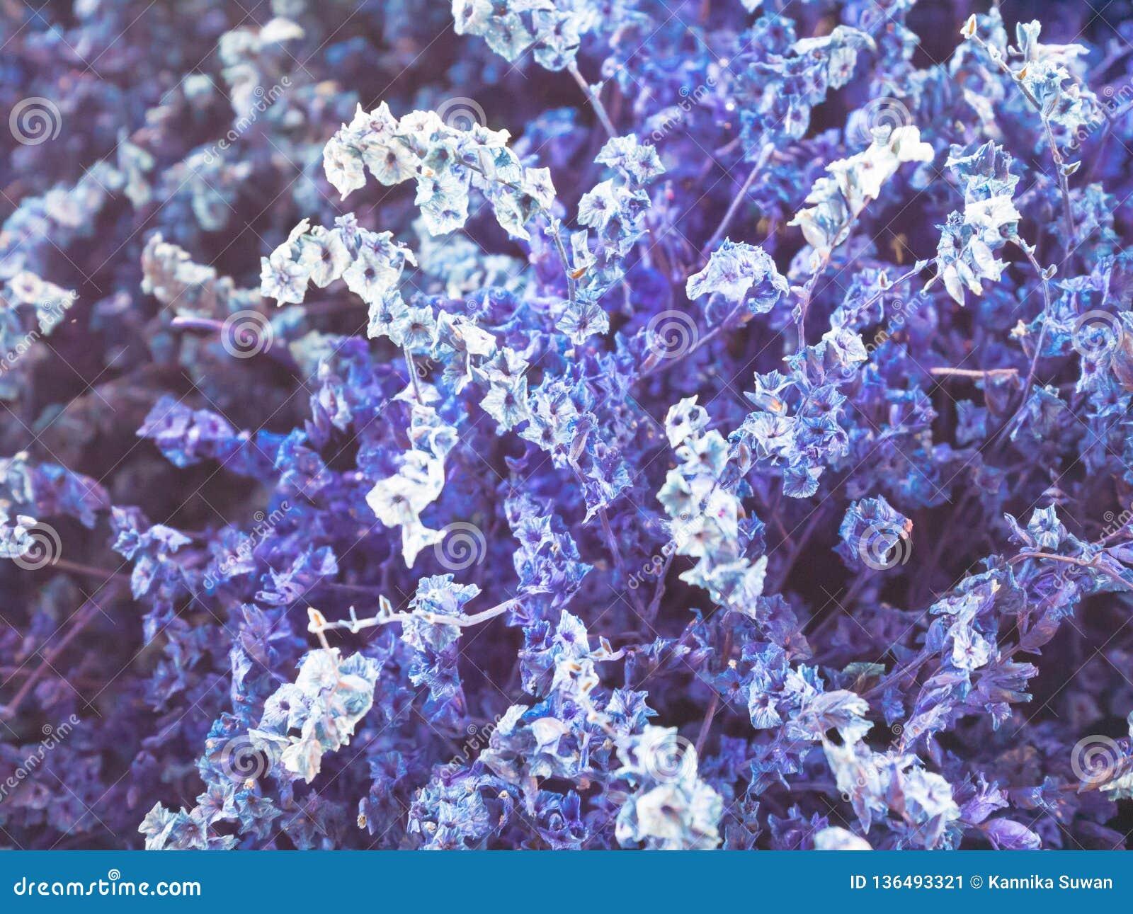 Konstgjorda purpurfärgade blommor är bakgrund