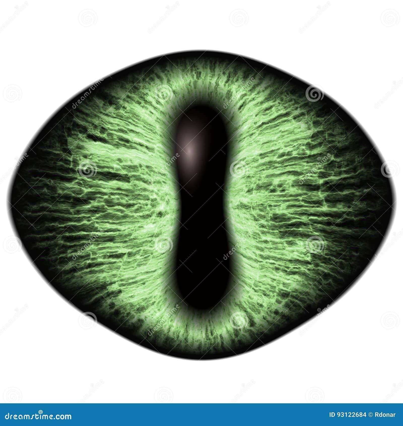 Konstigt grönt öga av det katt- djuret med den kulöra irins Detaljsikt in i isolerad rovdjurs- ögonkula