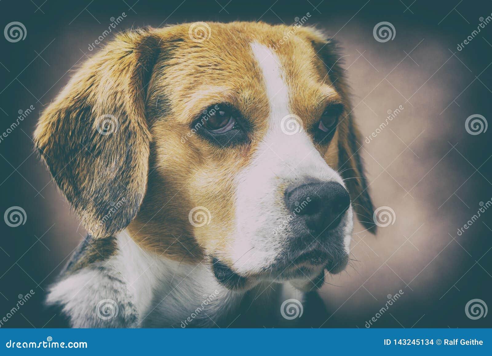 Konstnärlig stående av en beagle