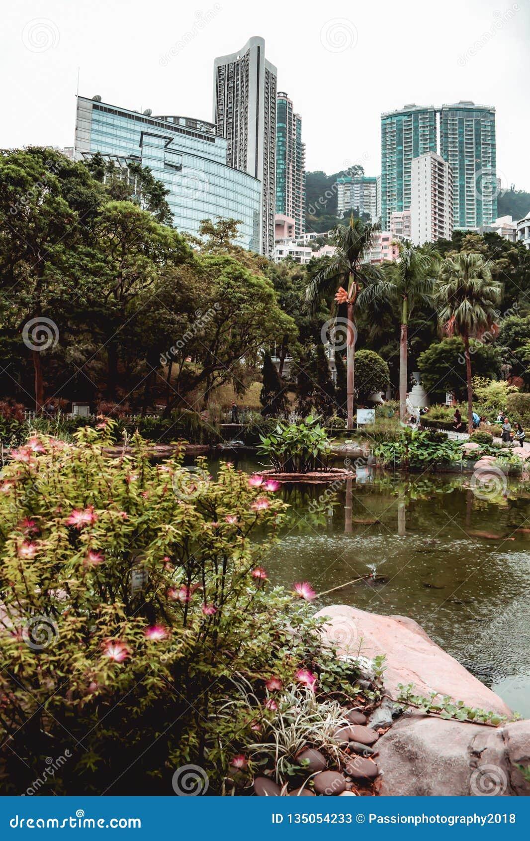 Kontorsbyggnader som döljas bak grönskan av Hong Kong, parkerar