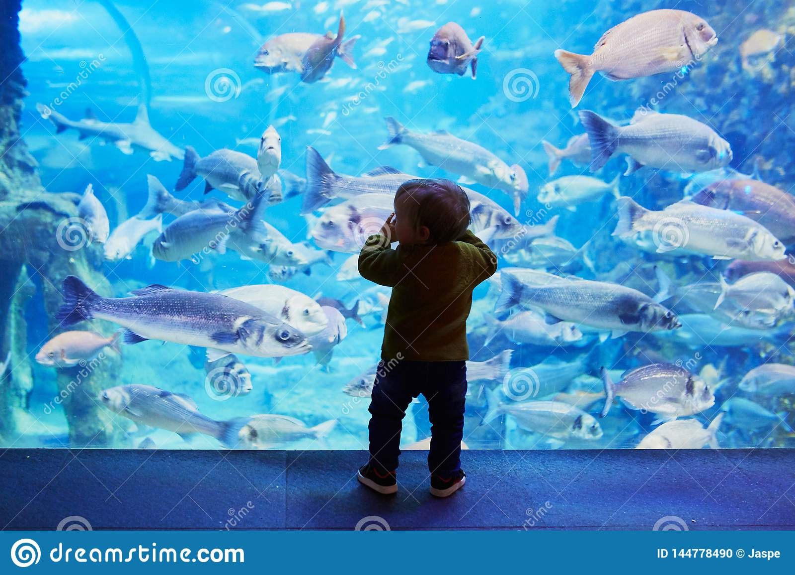 Kontur av det lilla barnet som tycker om sikter av undervattens- liv