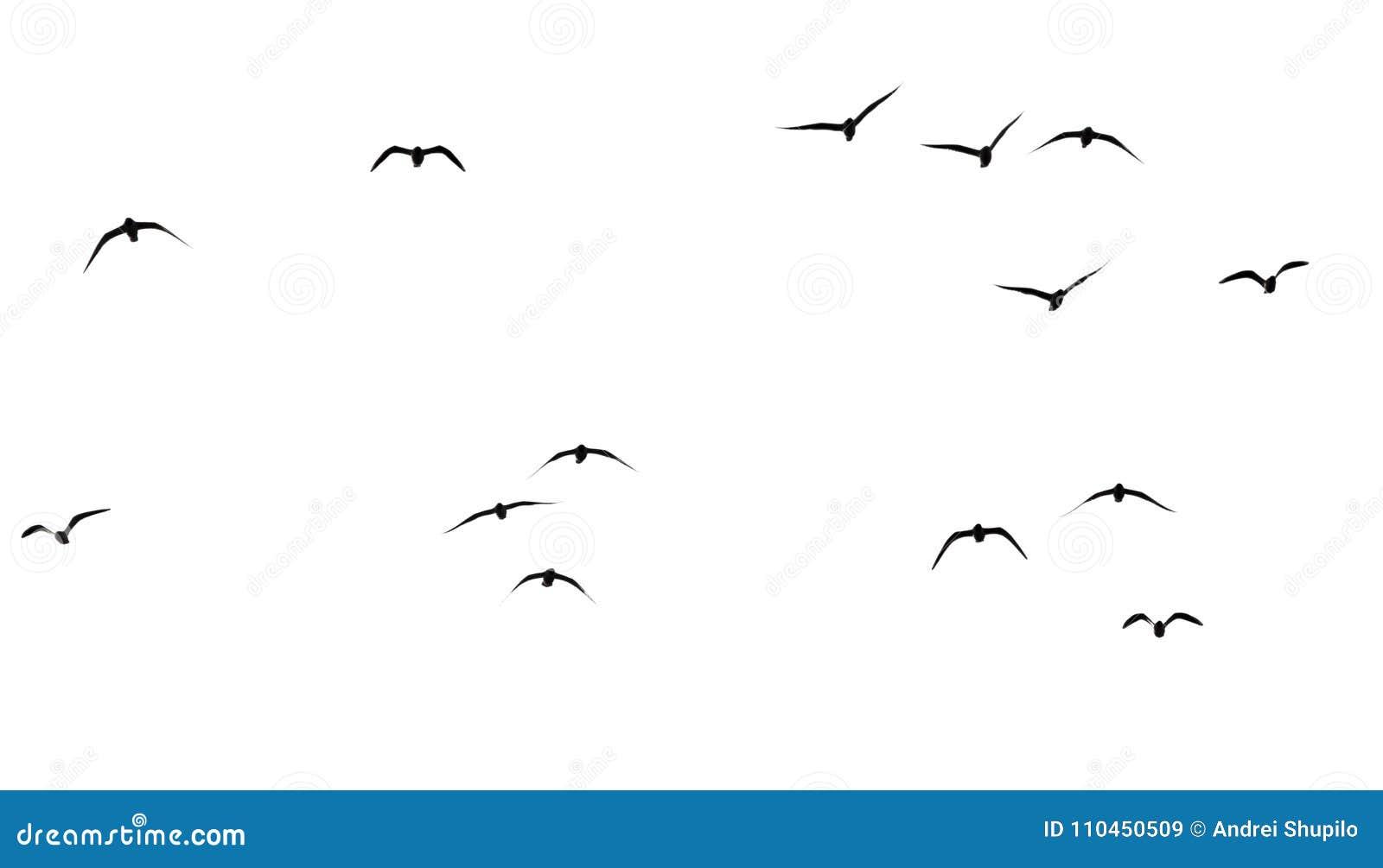 Kontur av en flock av fåglar på en vit bakgrund