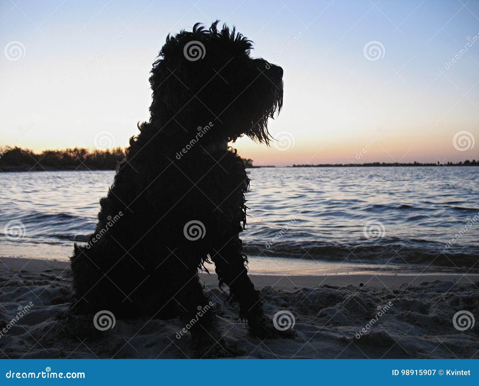 Kontur av en hund på stranden på solnedgången