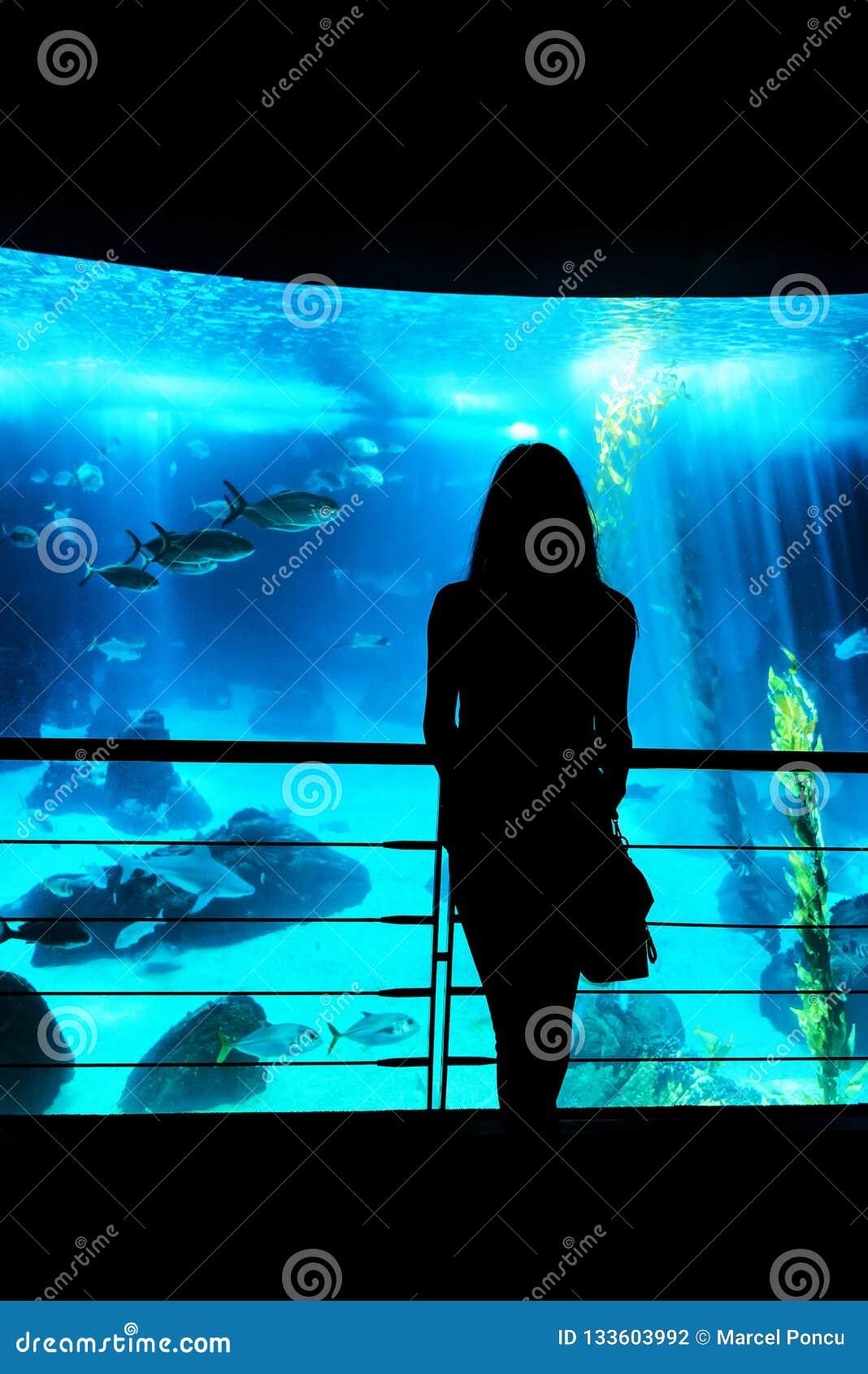 Kontur av en ung dam som ser fiskbehållaren på det aquar
