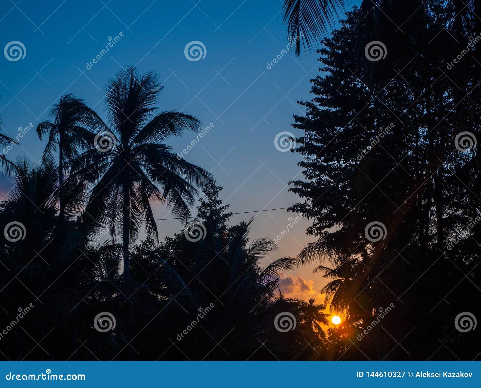 Kontur av palmtr?d p? solnedg?ngen och m?ngf?rgade moln