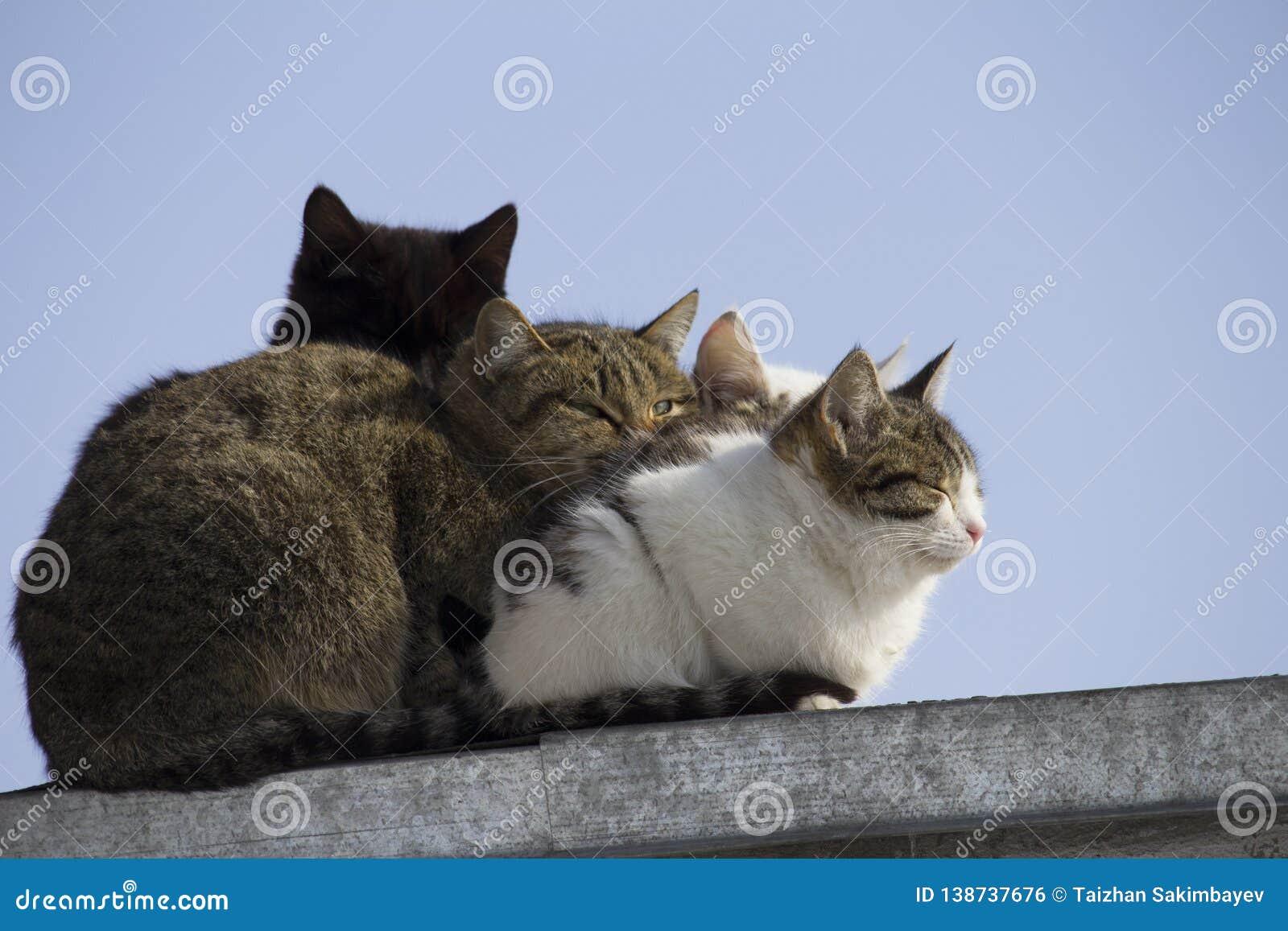 Kontur av svart katts huvud bland flera katter på taket