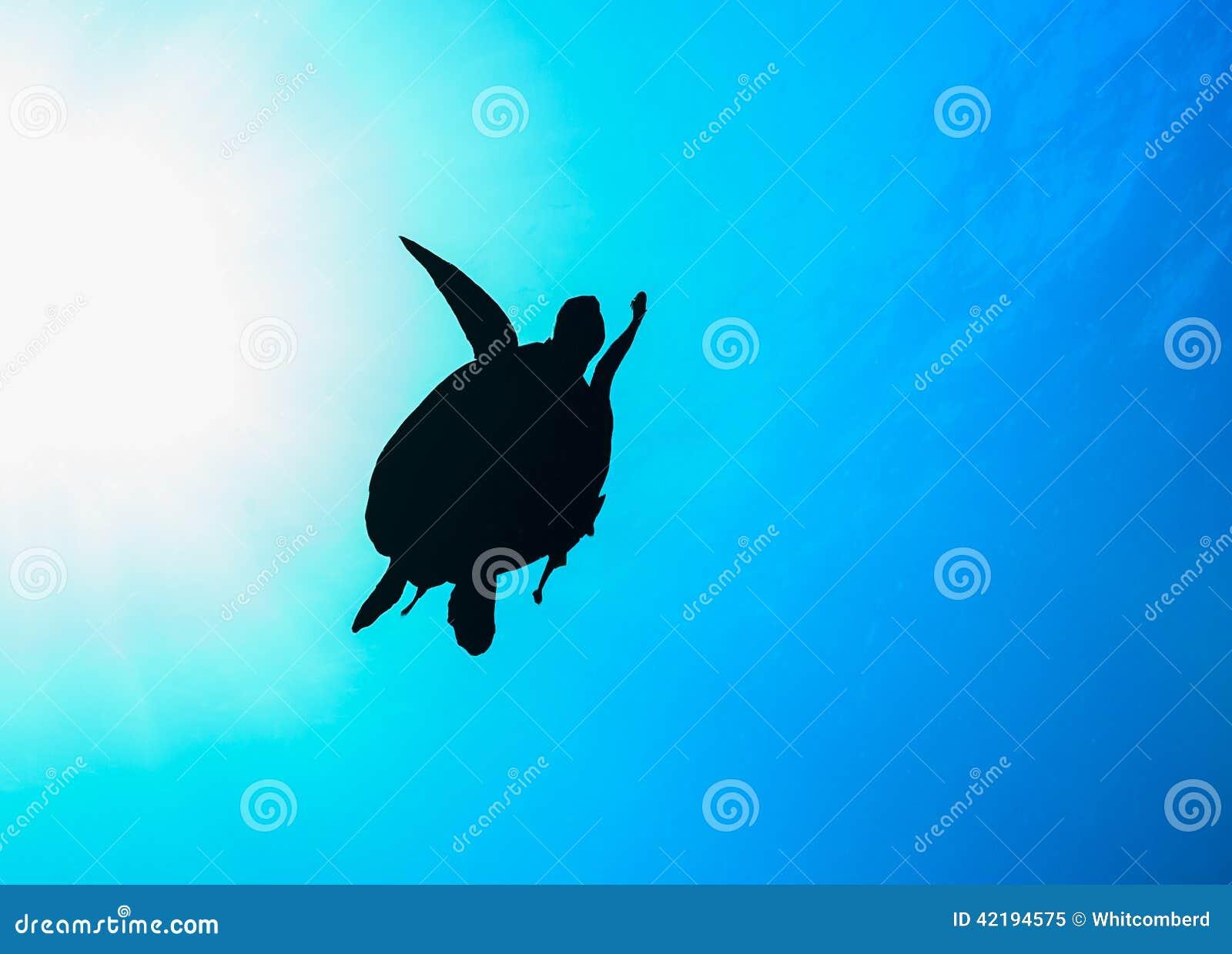 Kontur för havssköldpadda med sunburst