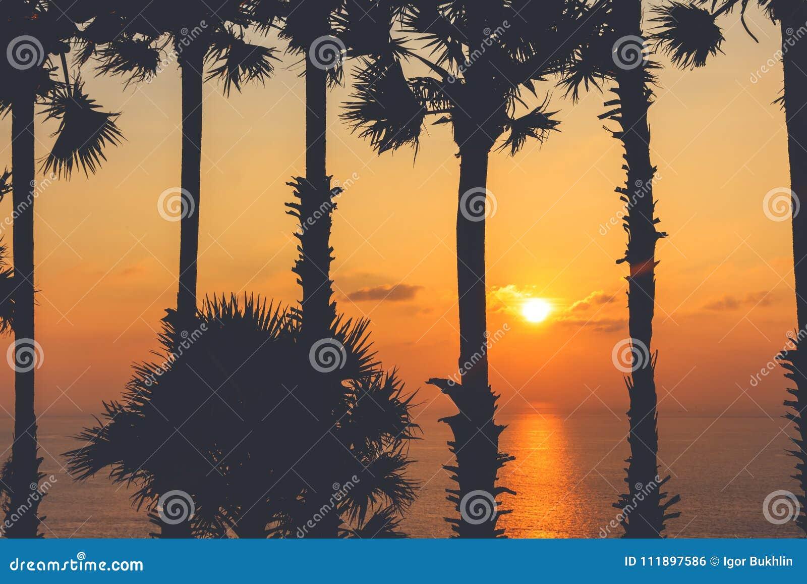 Konturer av palmträd och det härliga havet under solnedgång i Thailand, Phuket