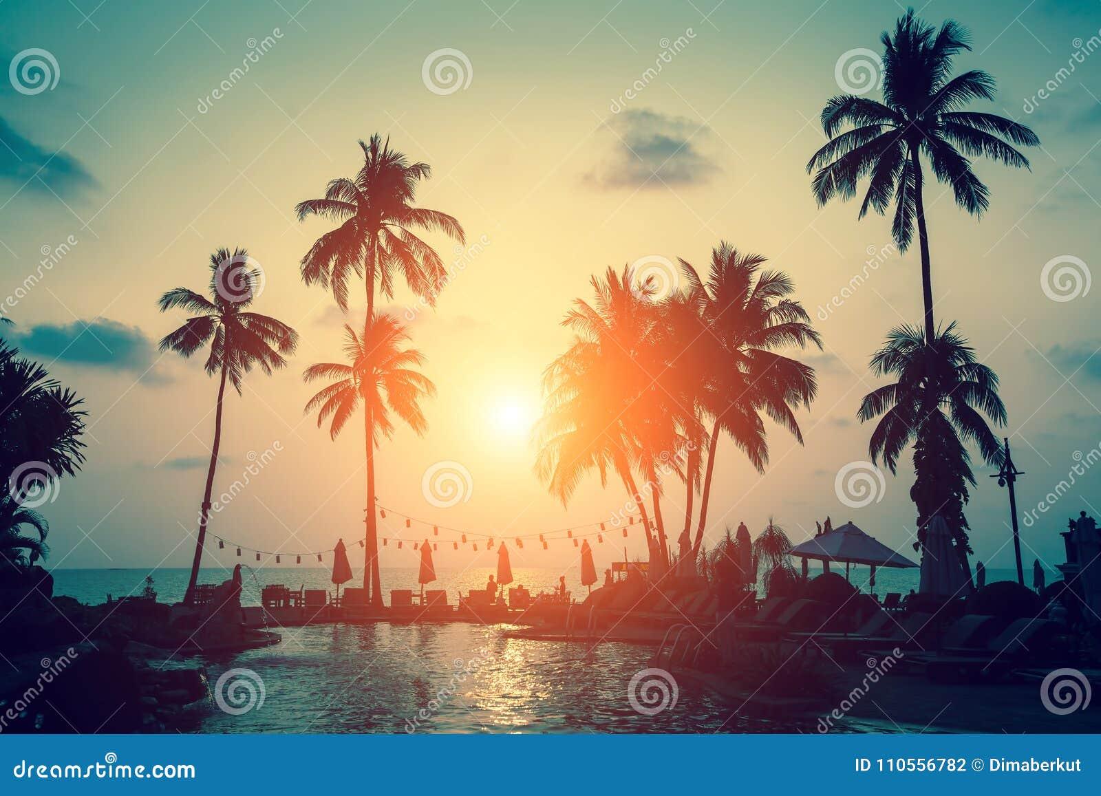 Konturer av palmträd på ett tropiskt hav sätter på land