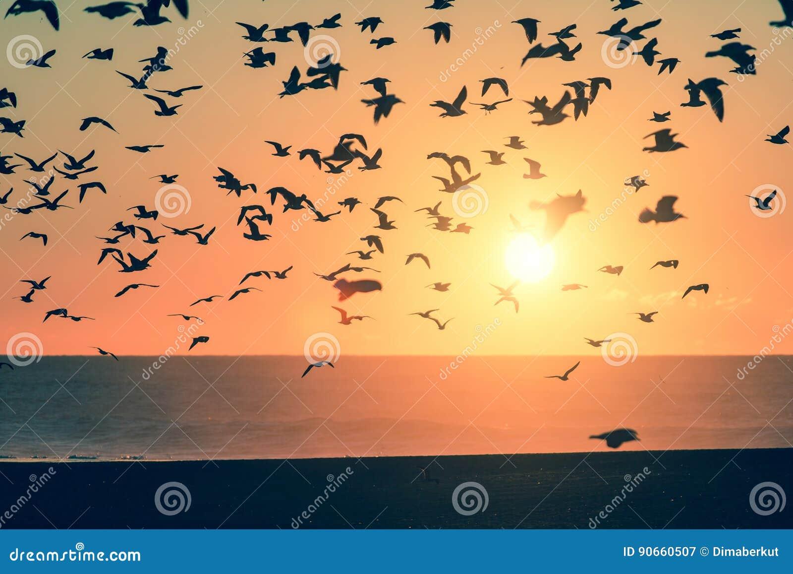 Konturfåglar över havet under solnedgång