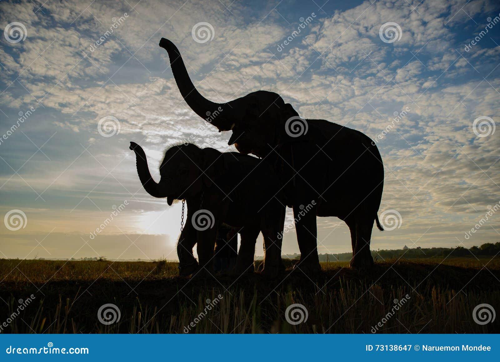 Konturn av elefanter