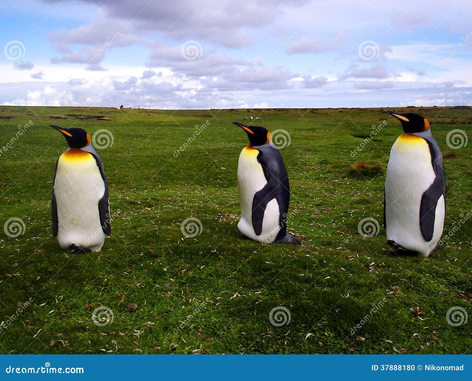 Konung Penguins