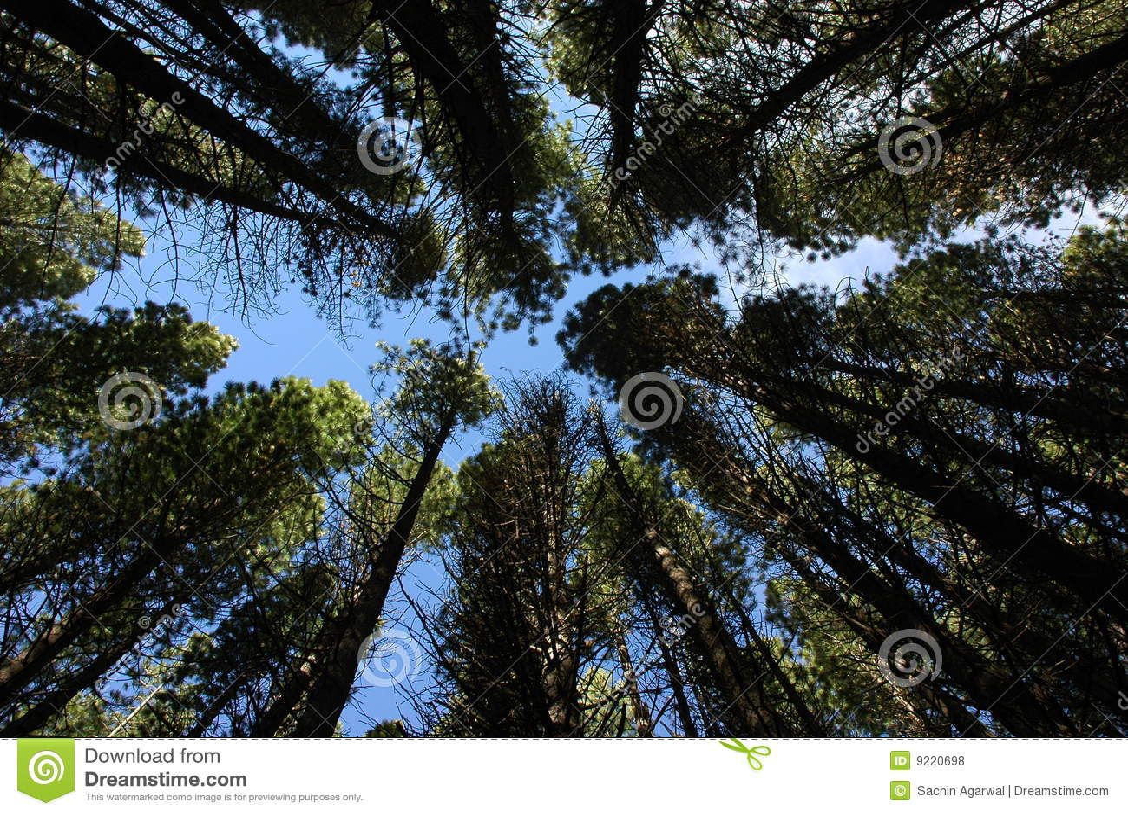 Konvergierende Bäume
