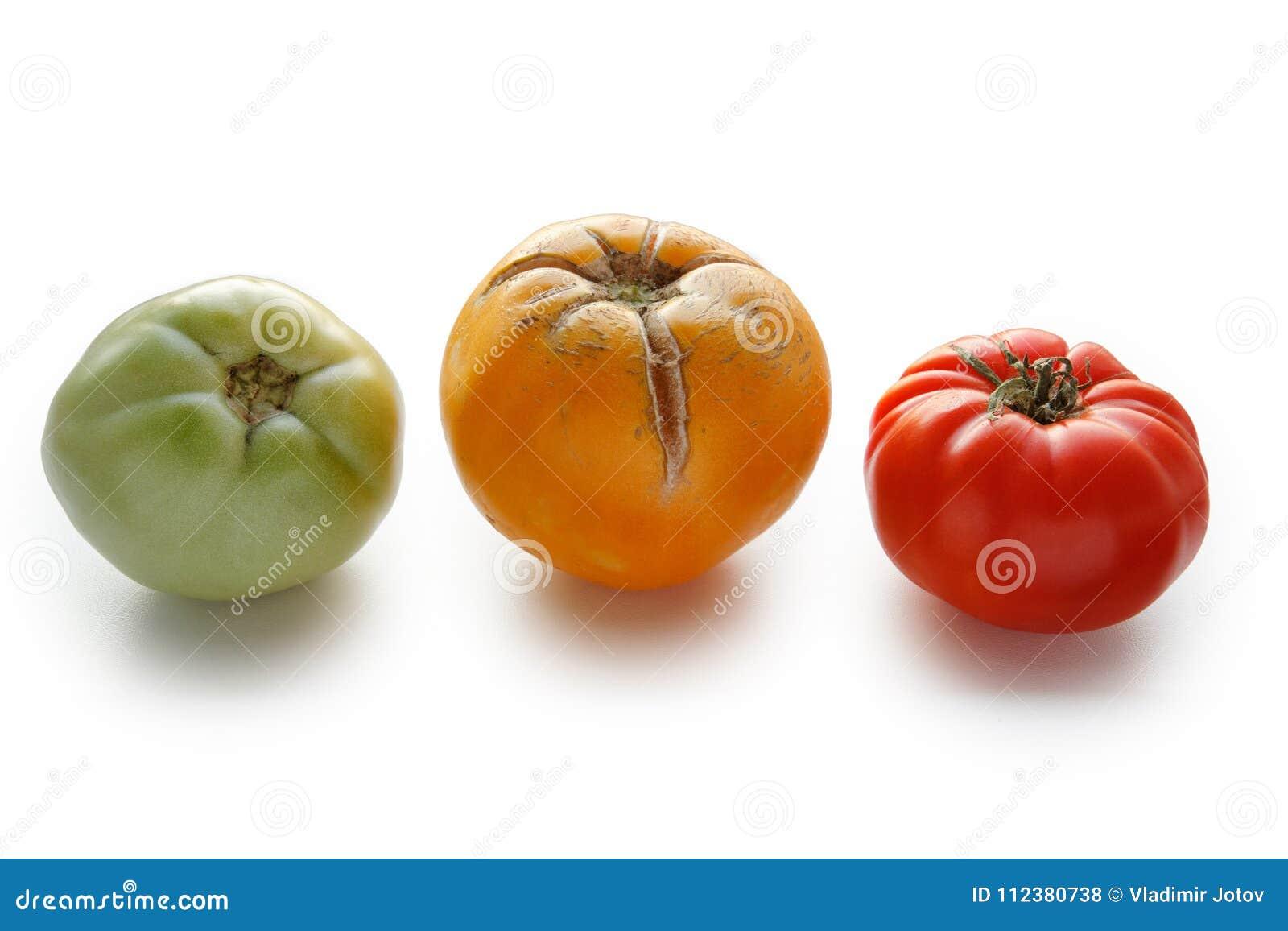 Konzept von drei Tomaten - rot, grün und gelb auf weißem Hintergrund