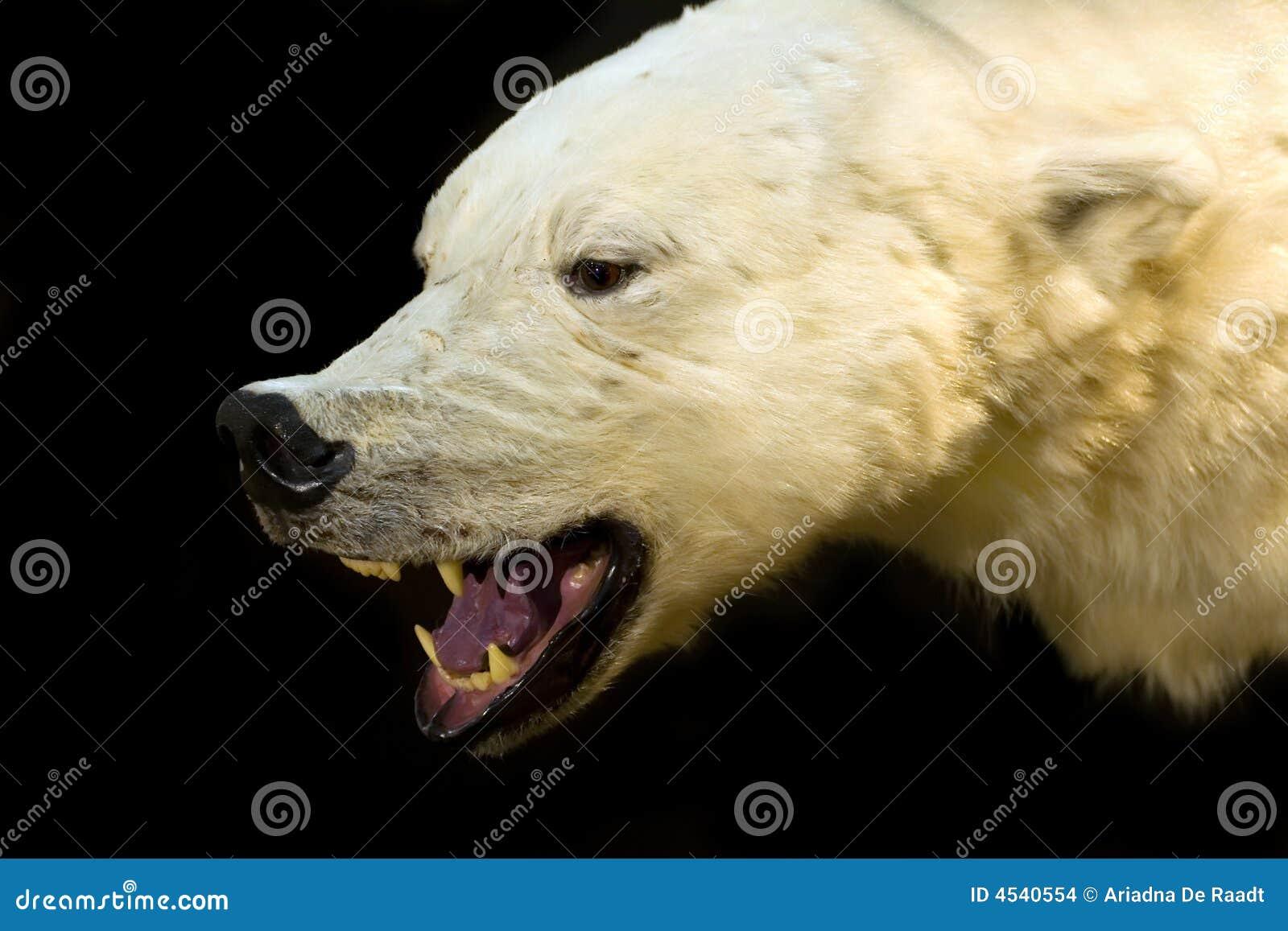 Troffer des eisbären im innenraum