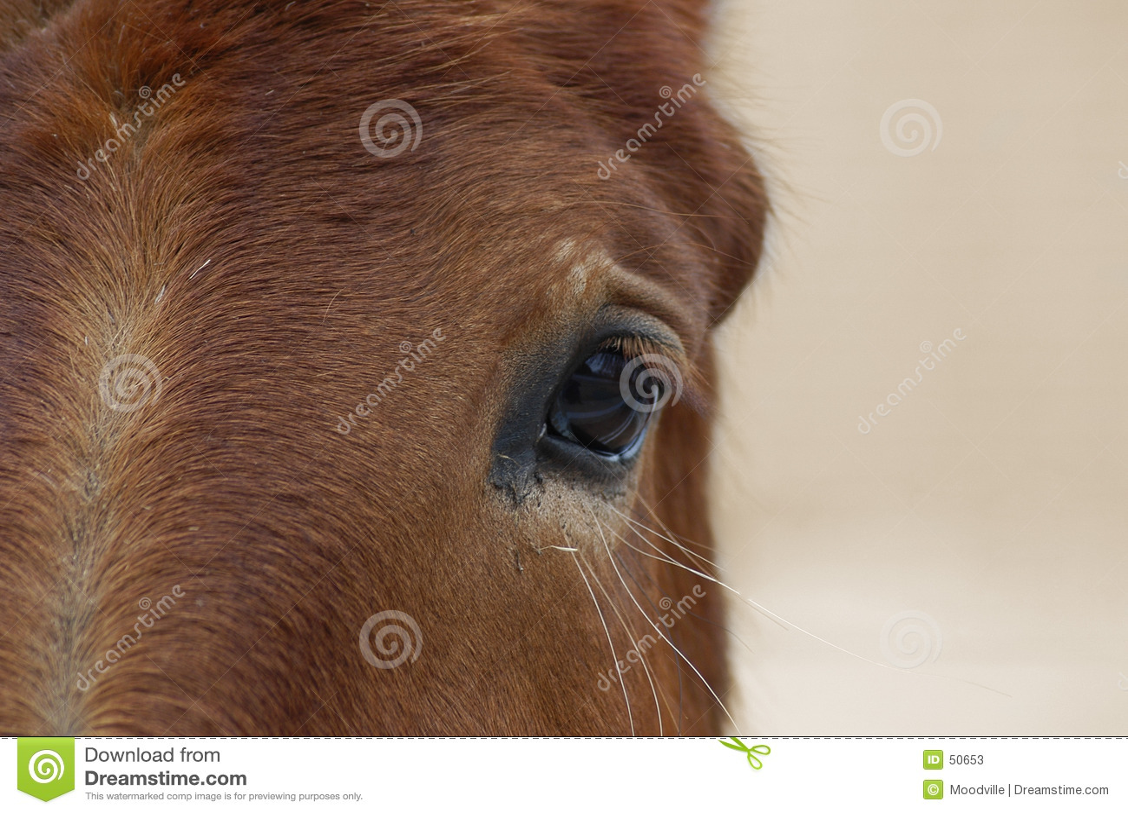 Kopf des Pferds