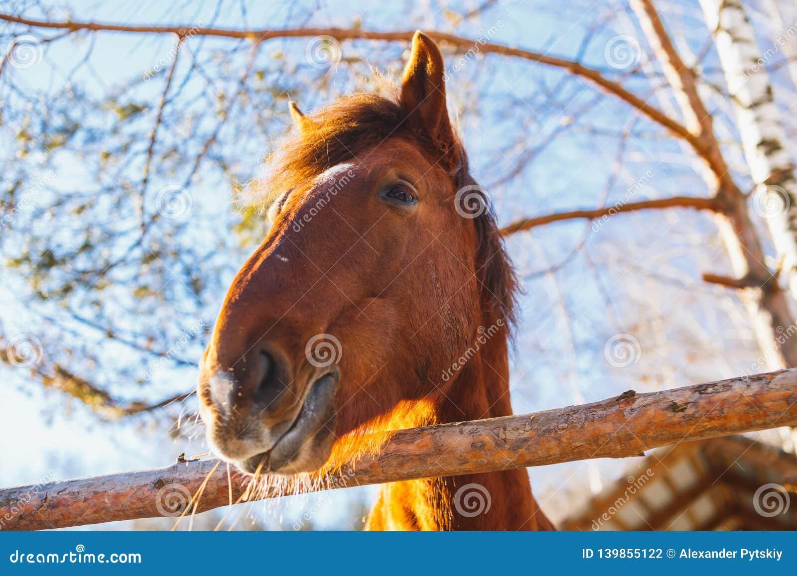 Kopf des Pferds an einem sonnigen Tag