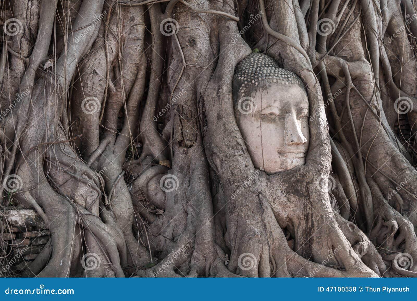 Kopf des Sandsteins Buddha in den Baum-Wurzeln bei Wat Mahathat, Ayut