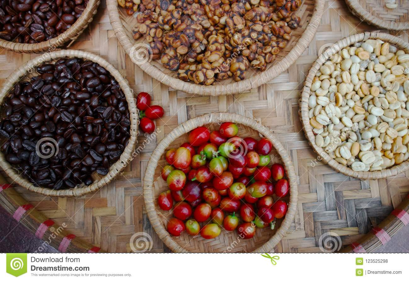 Kopi luwak or civet coffee stock photo. Image of kopi ...