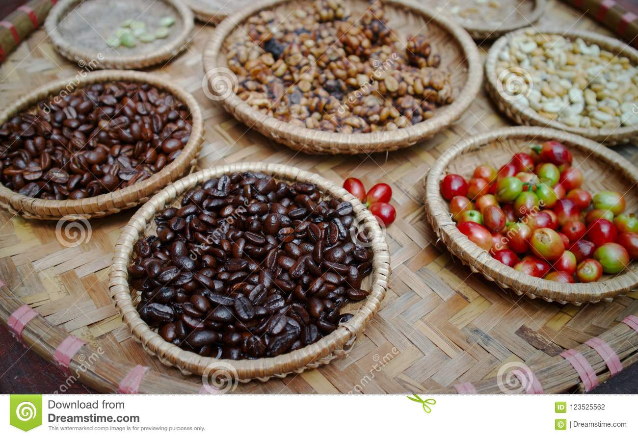 Kopi luwak or civet coffee stock photo. Image of aromatic ...
