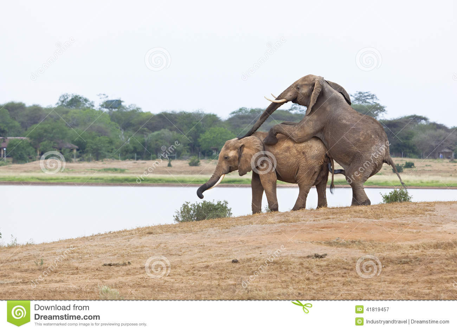 Afrikaans geslacht in het wild