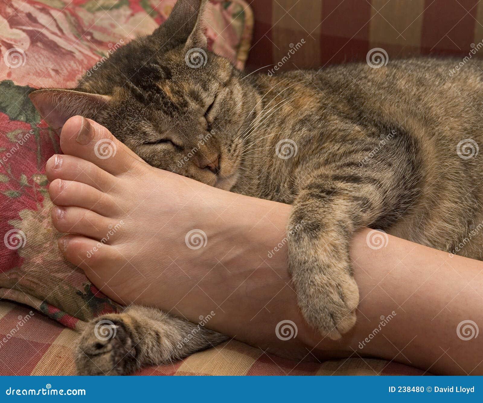 Kopplad av katt