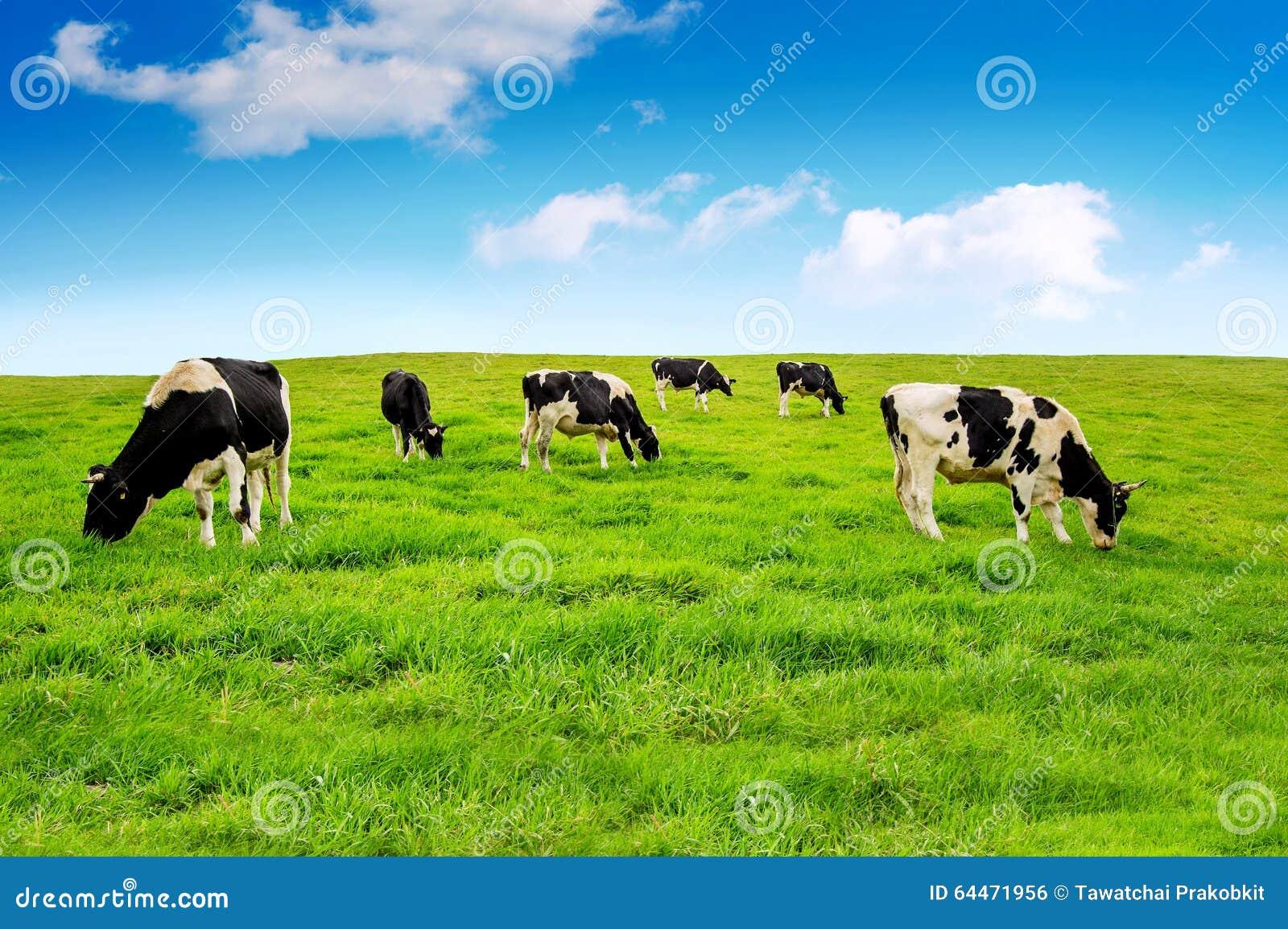 Kor field green