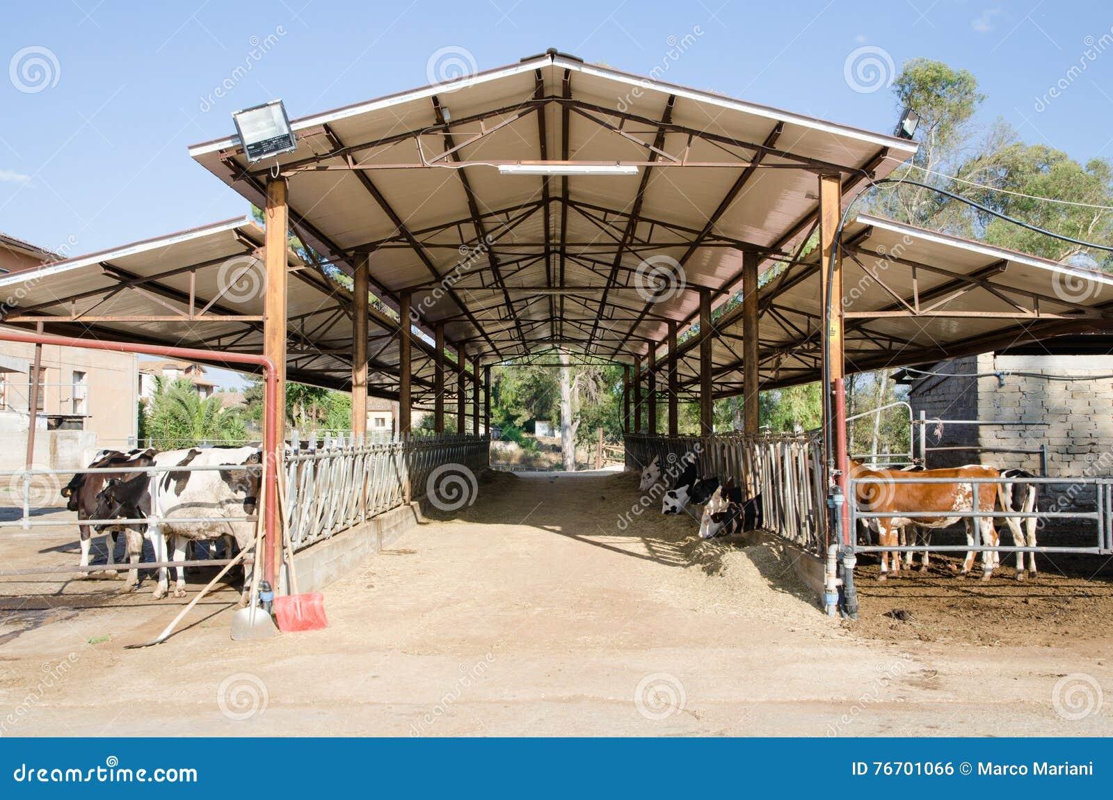 Kor i ett stall