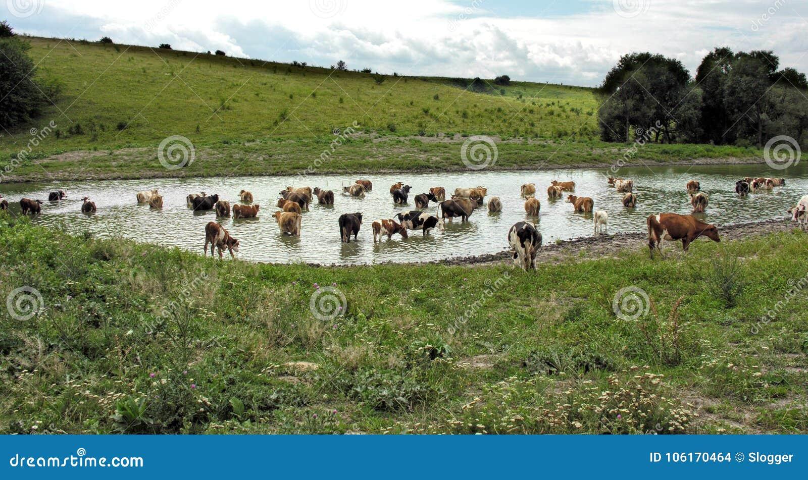 Kor på brunnsorten