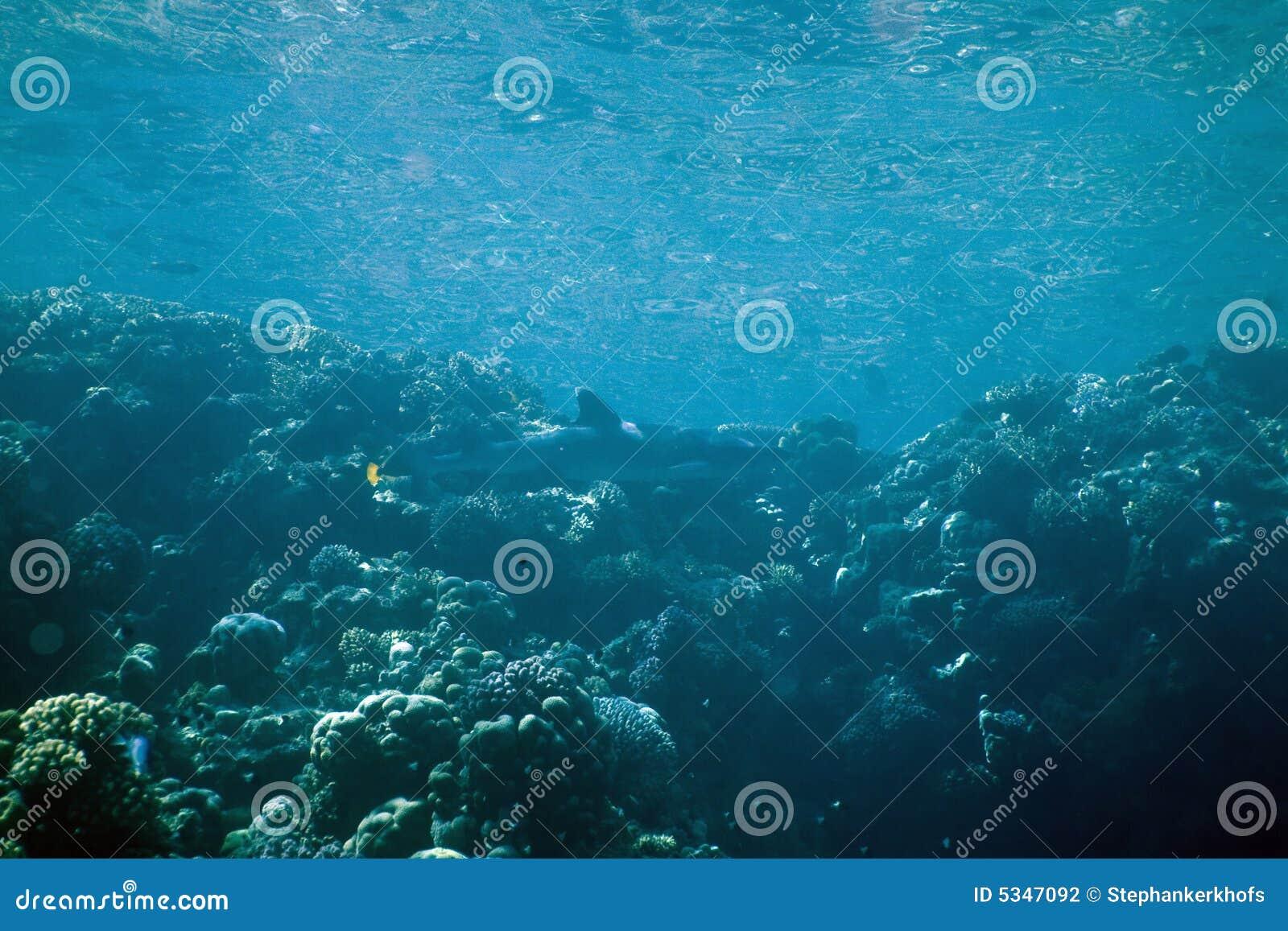 Koraal en vissen