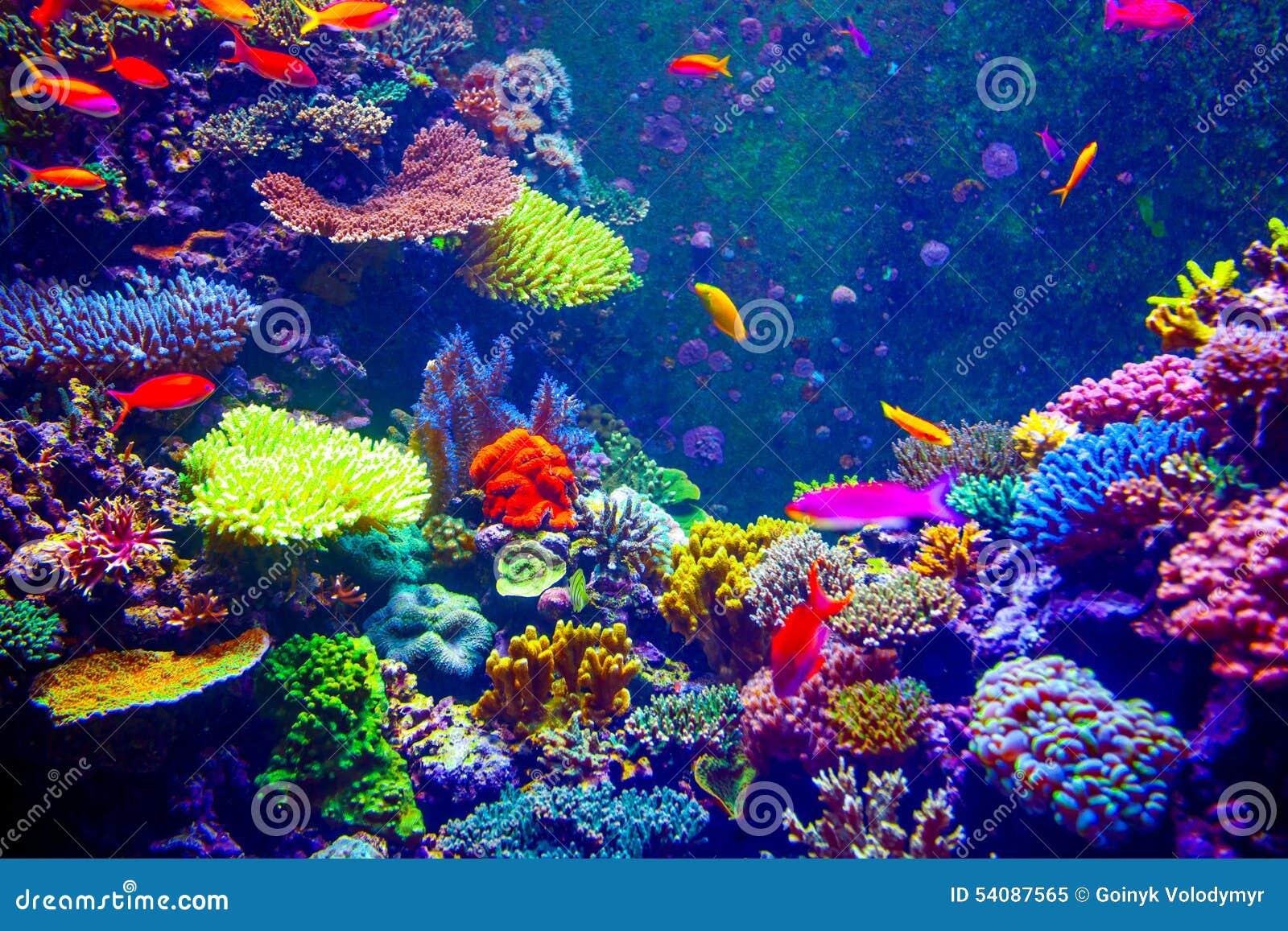 Koraalrif en Tropische Vissen