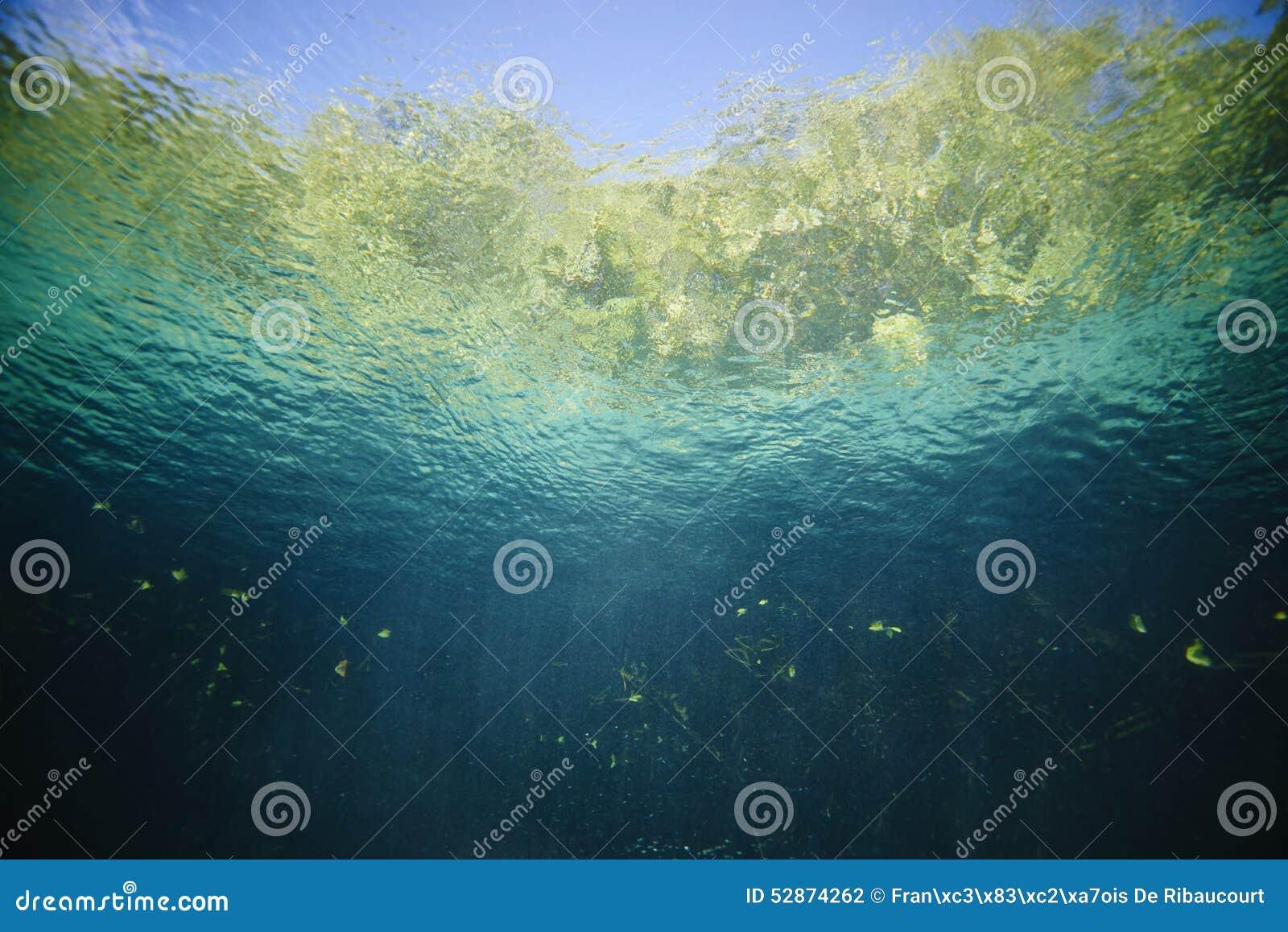 Korala ryba krajobrazu rafy tropikalny underwater