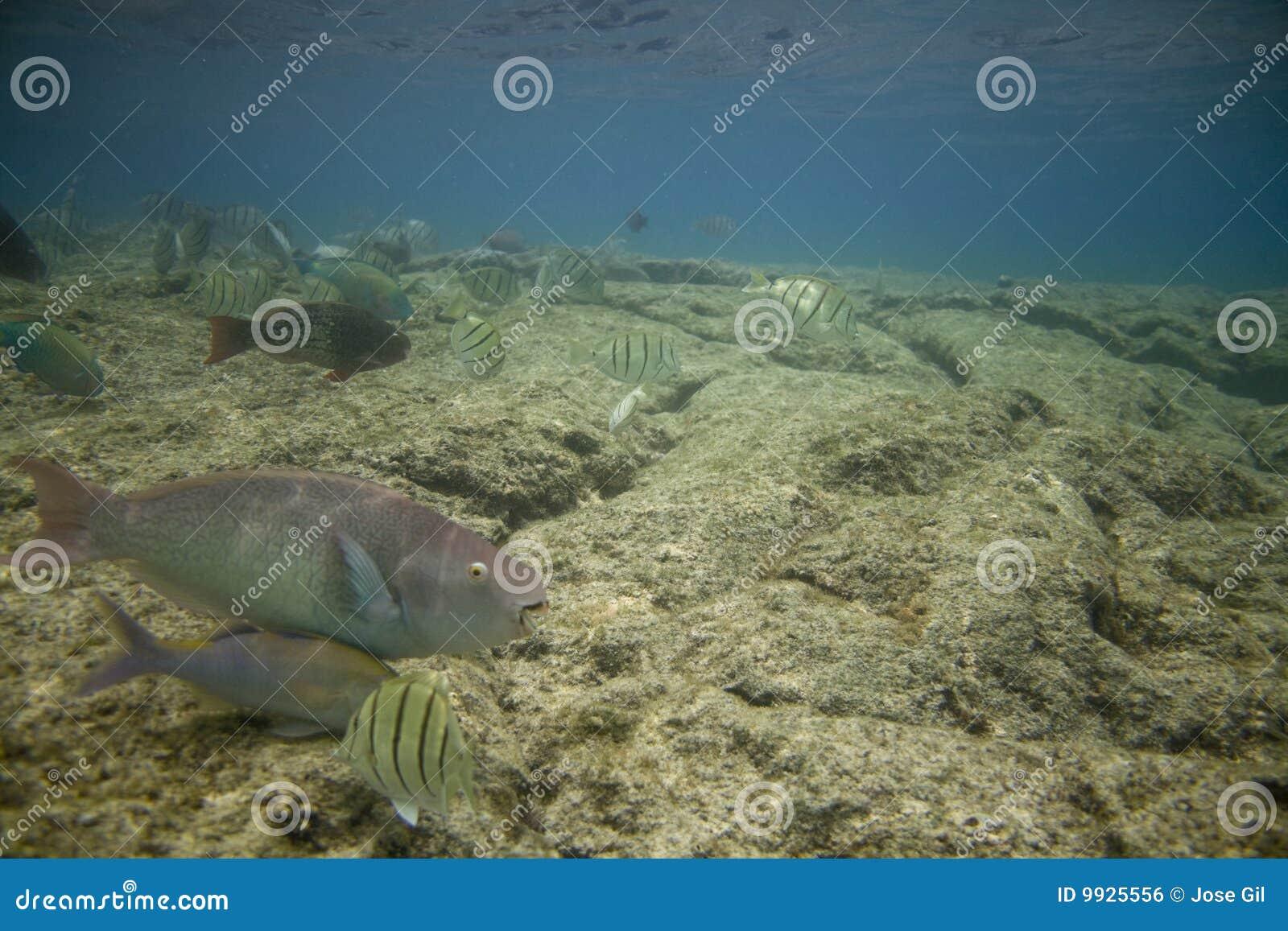 Korala ryba rafa