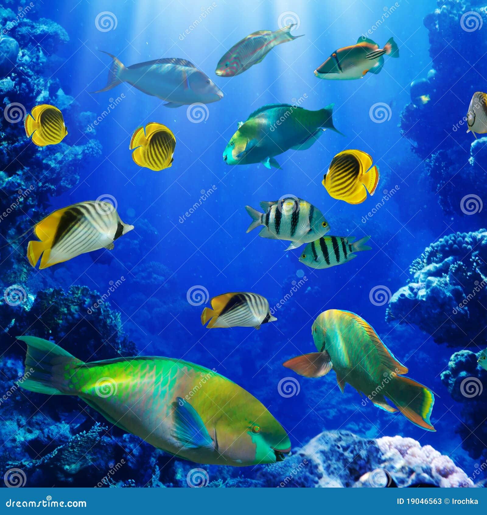 Korala ryba rafa tropikalna