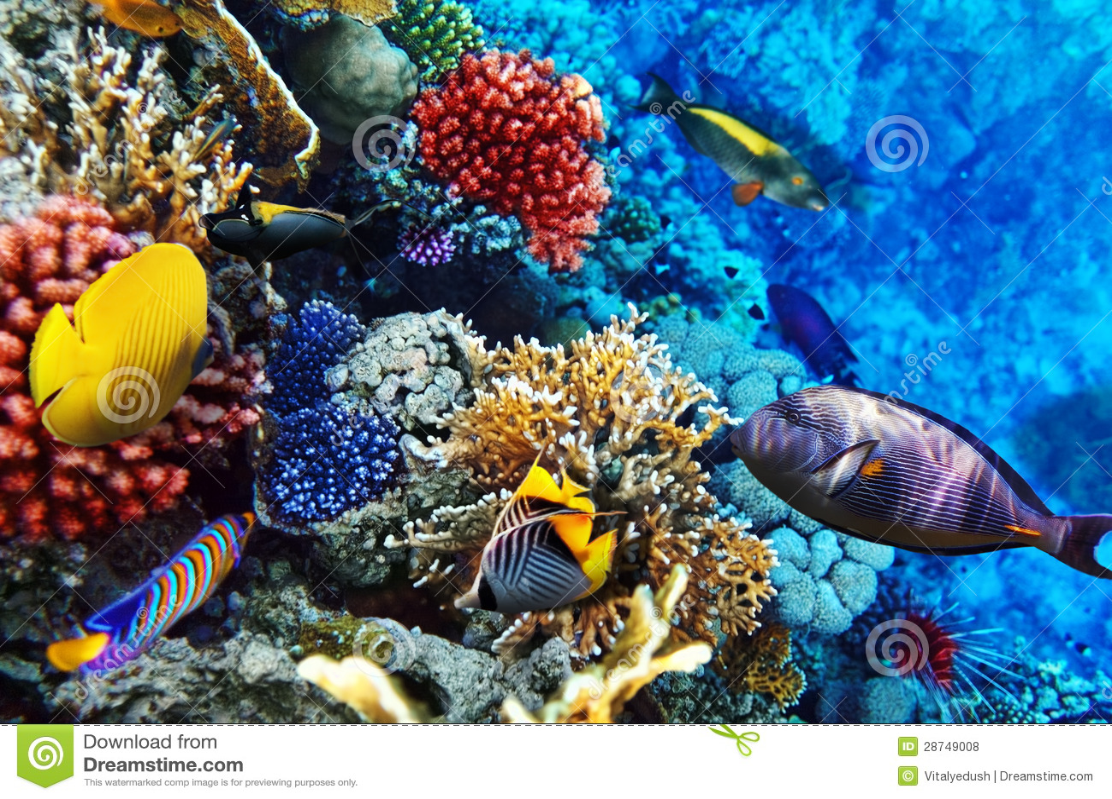 Fisk I Havet Datingsida