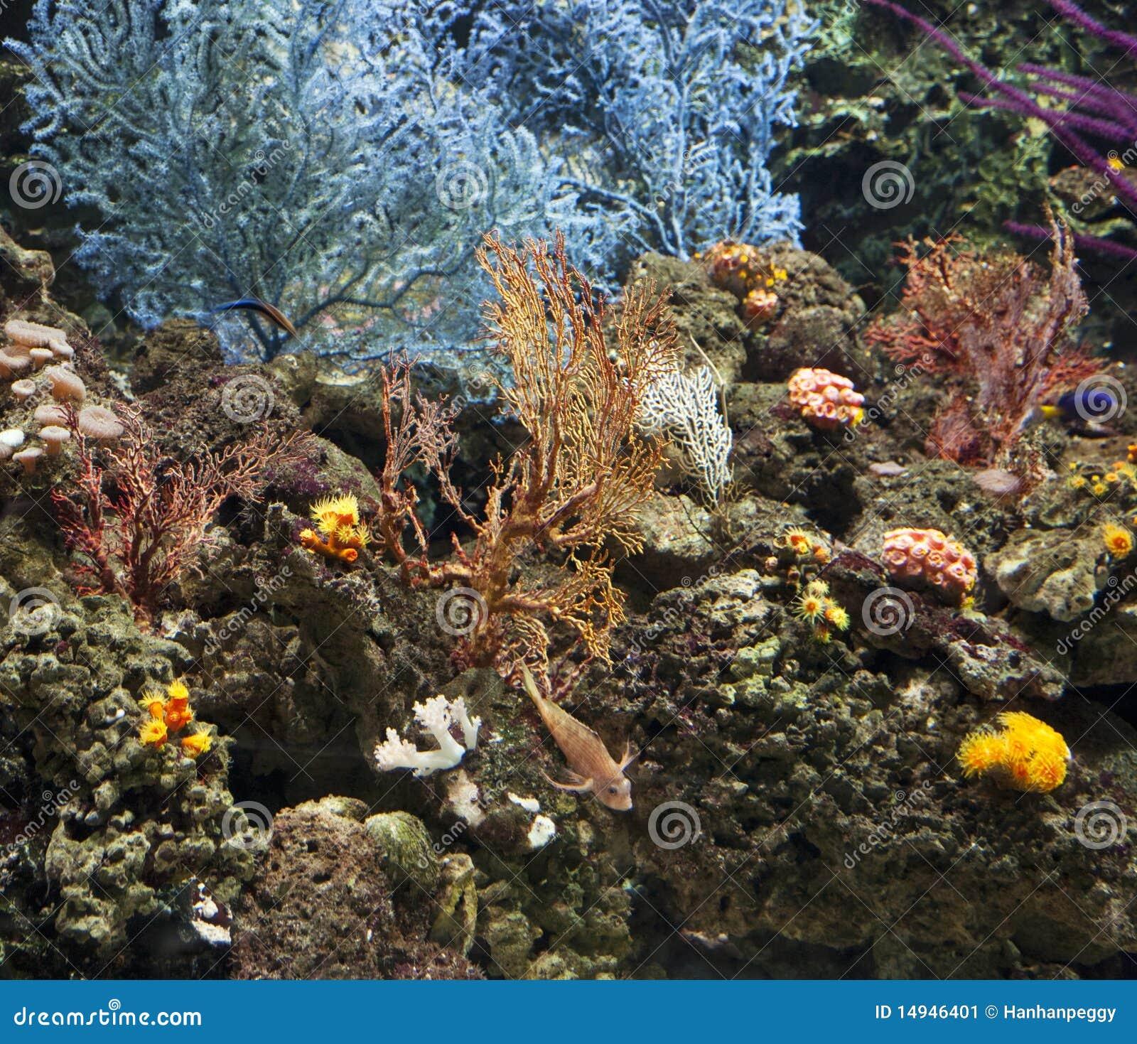 Koralle und Riff underea