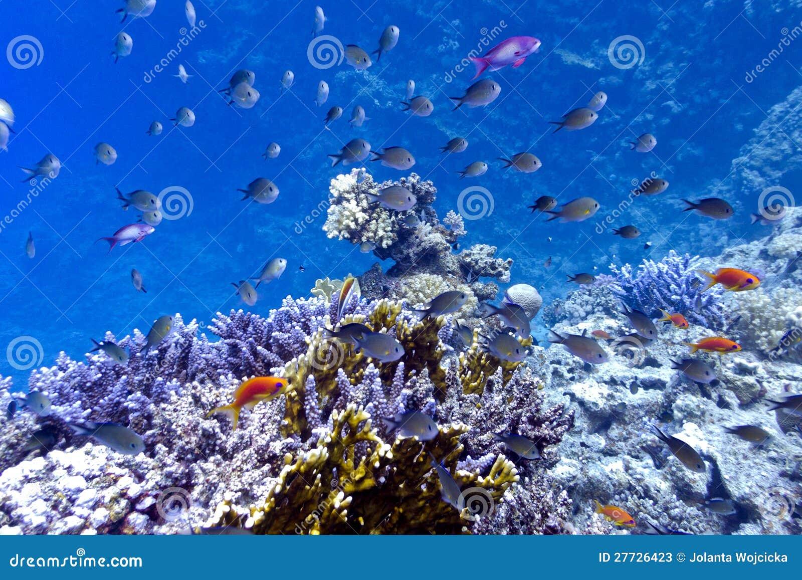 Korallenriff auf der Unterseite von Rotem Meer mit Zwangsarbeit, FI