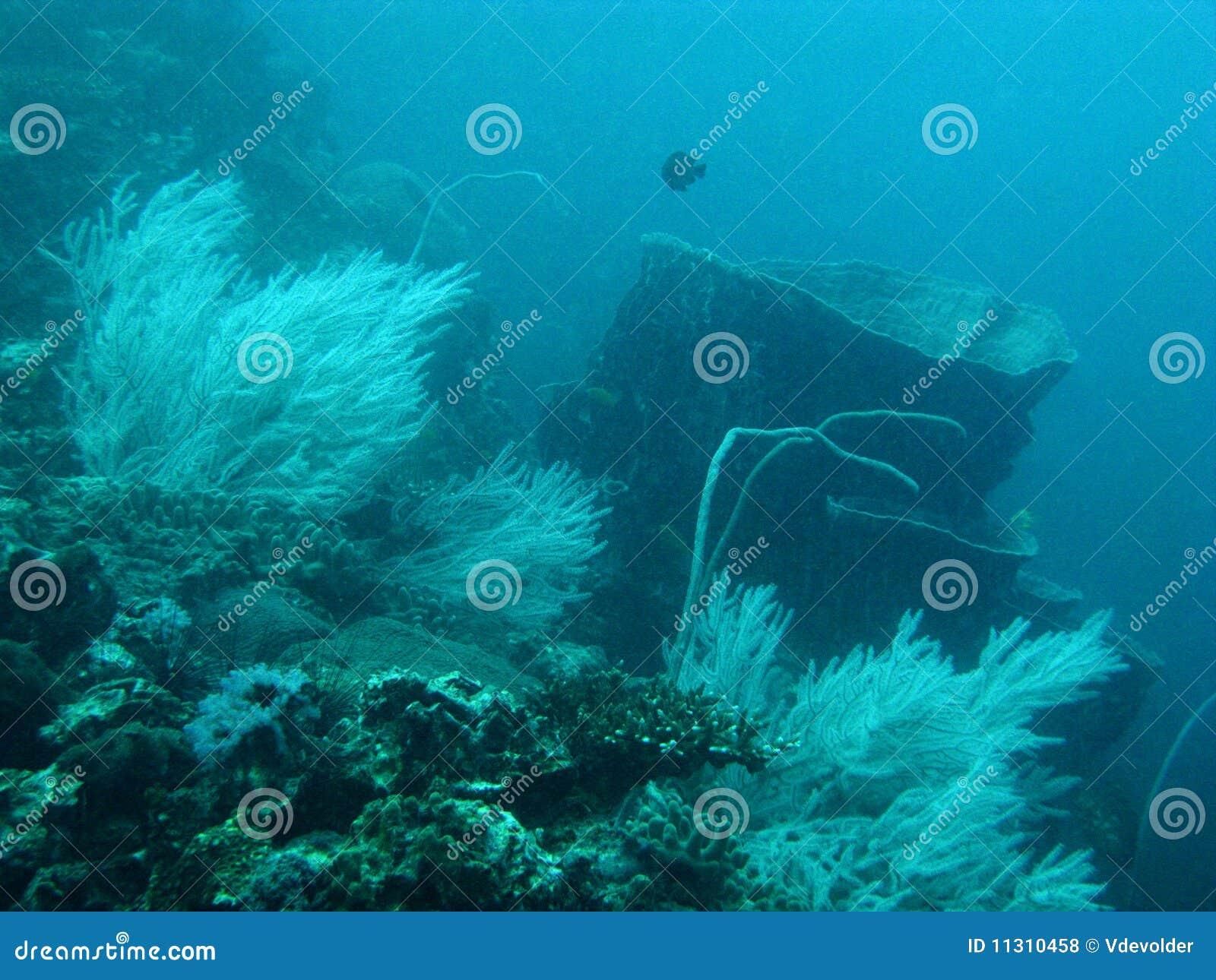 Korallenriff im Andaman Meer.